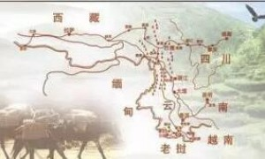 """普洱茶文化之魂""""茶马古道"""""""
